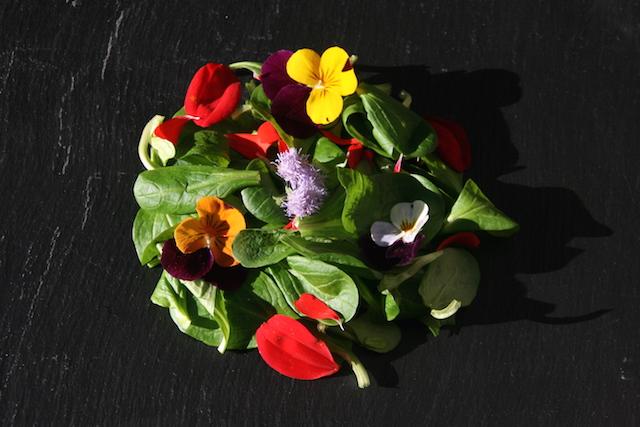 WORKSHOP 'La cucina Vegetale'