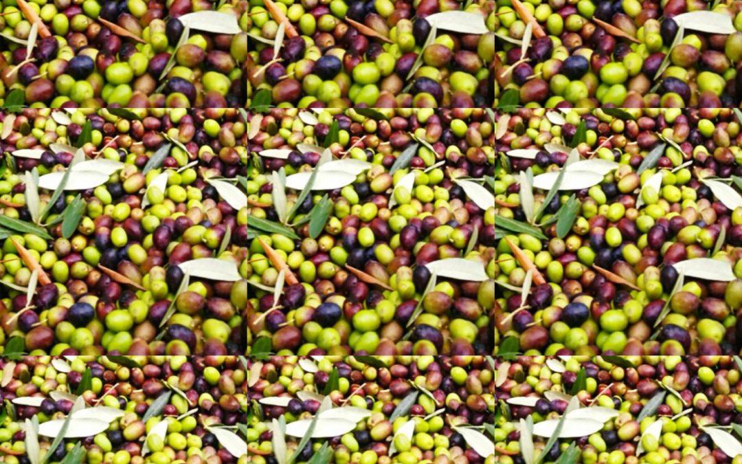 Olio…Con l'autunno e dopo la vendemmia, arriva il tempo dell'olio.