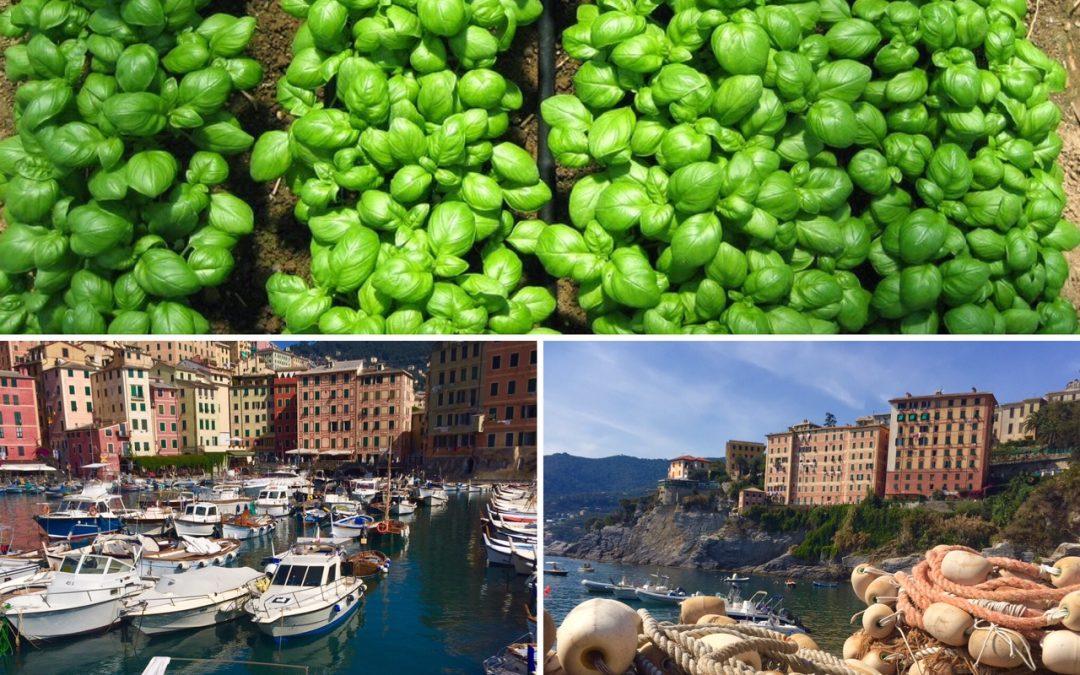 Basilico, quindi Pesto alla genovese